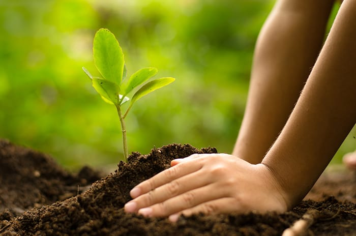 Know How to Save Environment|Global Assignment Help